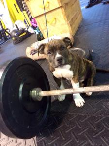 Dubz: Tommy's wingman and mascot of CrossFit CityPlace